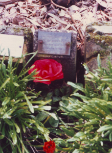 The Rose Garden in Botany Cemetery where Ellen's ashes were buried